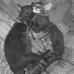Cat Hugs3 B & W