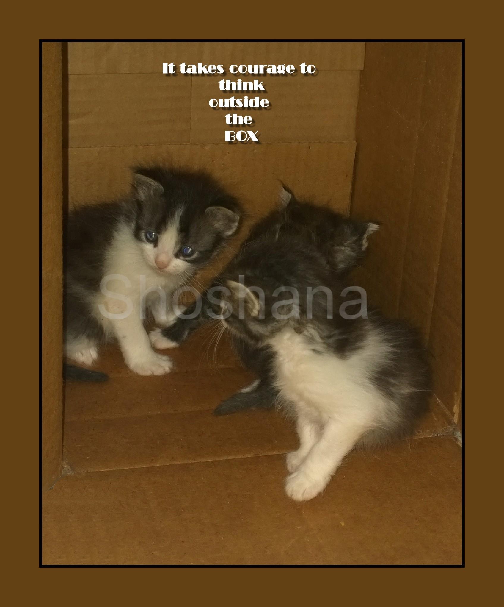 3catsInBoxA1