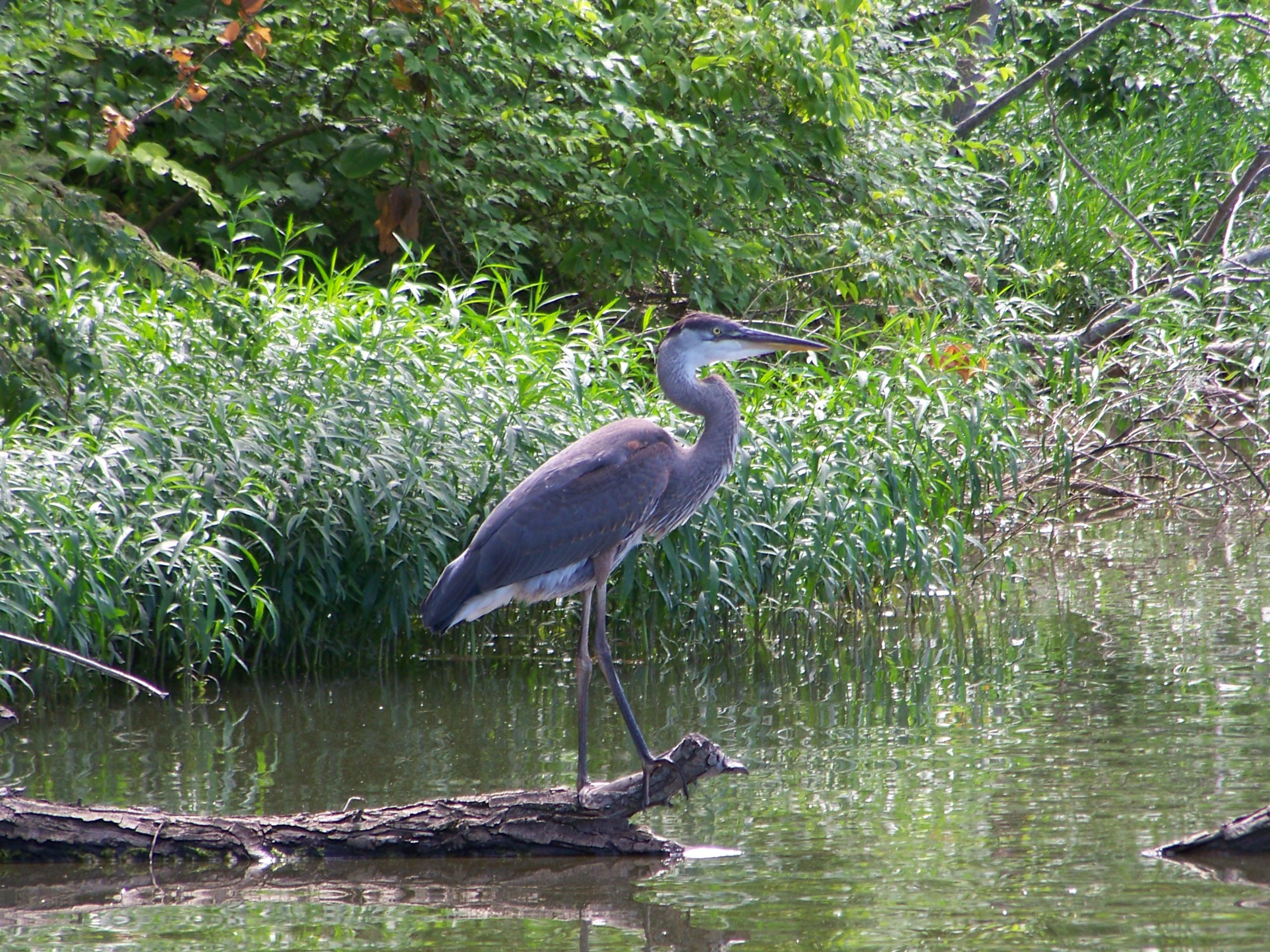 Original Crane